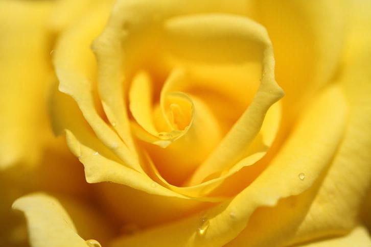 2011.05.31・『 花の文化園・薔薇 』 大阪府 河内長野市 08