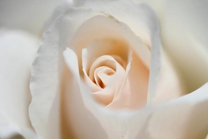 2011.05.31・『 花の文化園・薔薇 』 大阪府 河内長野市 07