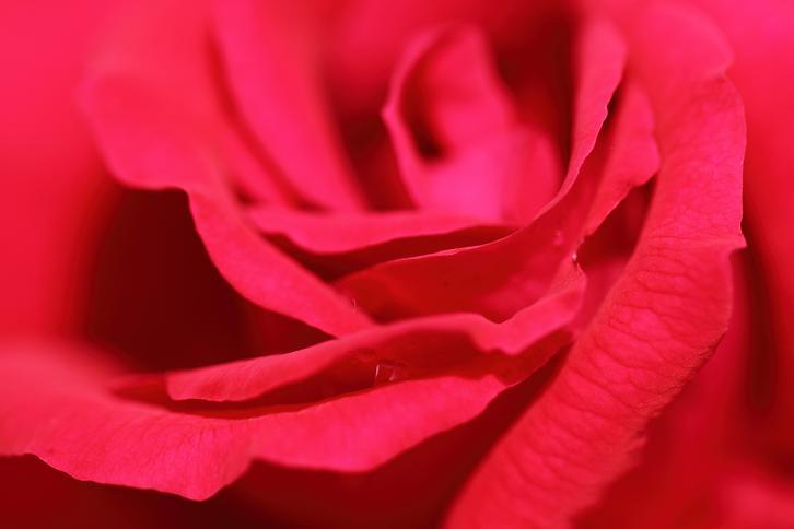2011.05.31・『 花の文化園・薔薇 』 大阪府 河内長野市 02