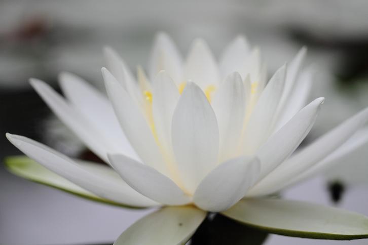 2011.06.15・『 わんぱく公園・睡蓮 』 和歌山県 海南市 03