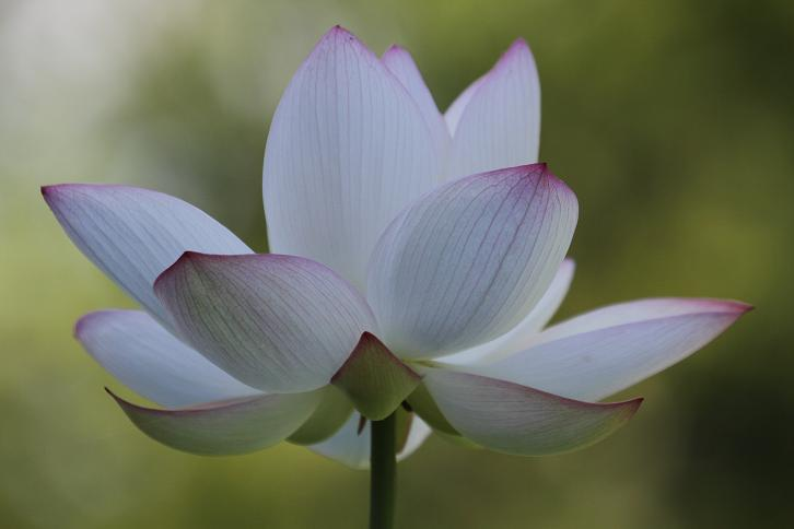 2011.07.13・『 和歌山県植物公園緑化センター・全03その02 』 和歌山県 岩出市 06