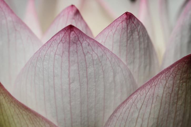 2011.07.13・『 和歌山県植物公園緑化センター・全03その02 』 和歌山県 岩出市 04