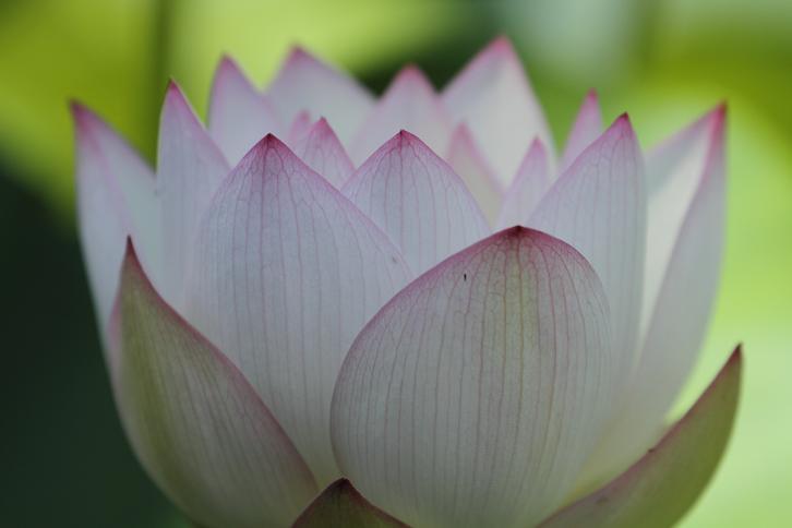 2011.07.13・『 和歌山県植物公園緑化センター・全03その02 』 和歌山県 岩出市 02