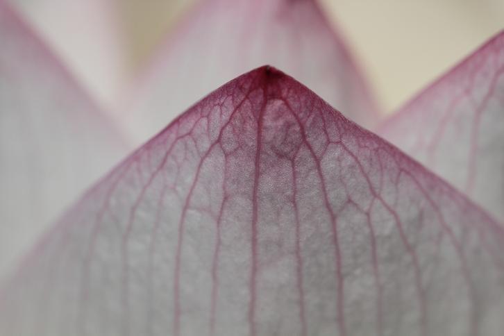 2011.07.13・『 和歌山県植物公園緑化センター・全03その02 』 和歌山県 岩出市 03