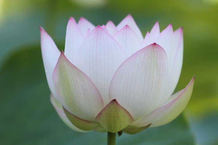 2011.07.13・『 和歌山県植物公園緑化センター・全03その02 』 和歌山県 岩出市 01