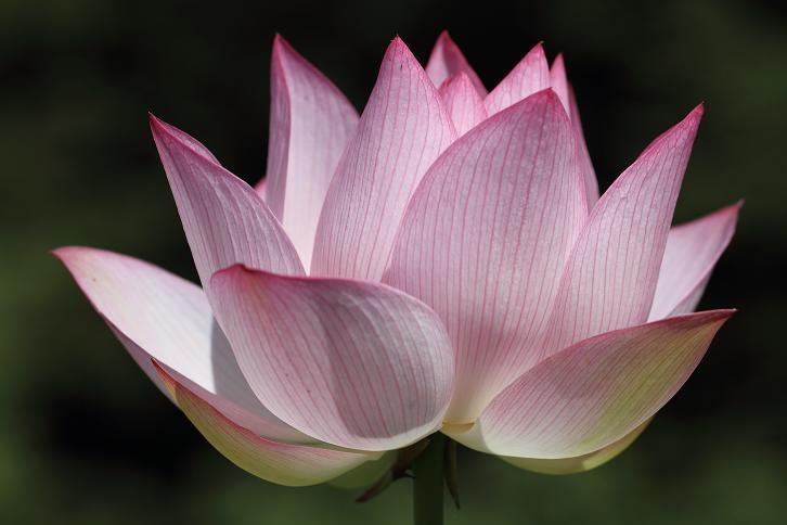 2011.07.13・『 和歌山県植物公園緑化センター・全03その01 』 和歌山県 岩出市 09