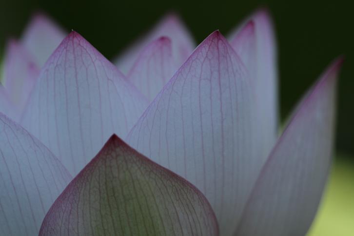 2011.07.13・『 和歌山県植物公園緑化センター・全03その01 』 和歌山県 岩出市 06