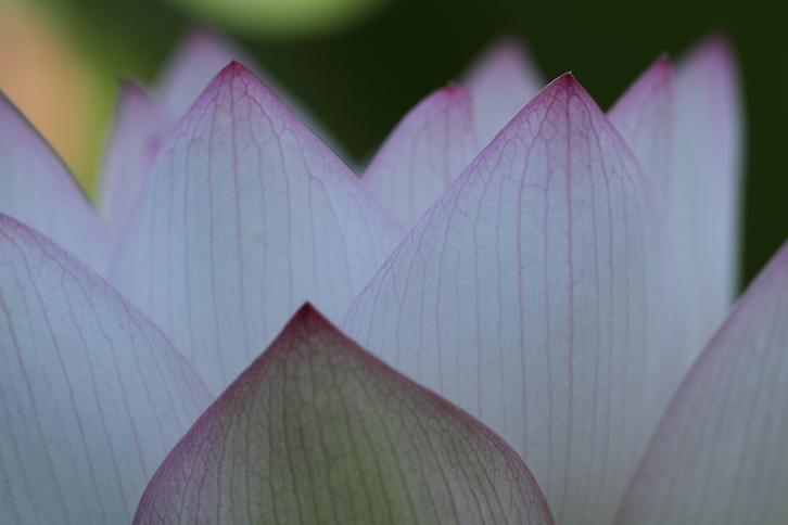 2011.07.13・『 和歌山県植物公園緑化センター・全03その01 』 和歌山県 岩出市 05