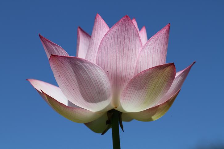 2011.07.13・『 和歌山県植物公園緑化センター・全03その01 』 和歌山県 岩出市 03