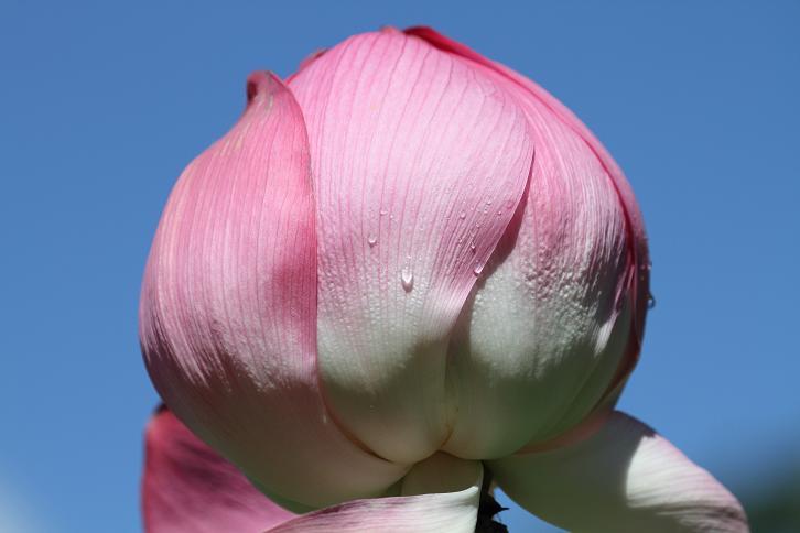 2011.07.13・『 和歌山県植物公園緑化センター・全03その01 』 和歌山県 岩出市 01