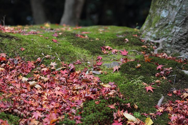 2011.12.05・『 金閣寺 』京都 04