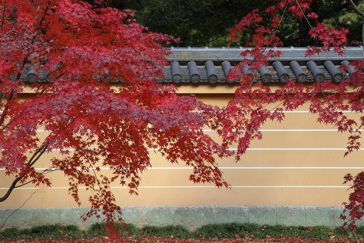 2011.12.05・『 金閣寺 』京都 06