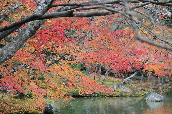 2011.12.05・『 金閣寺 』京都 10