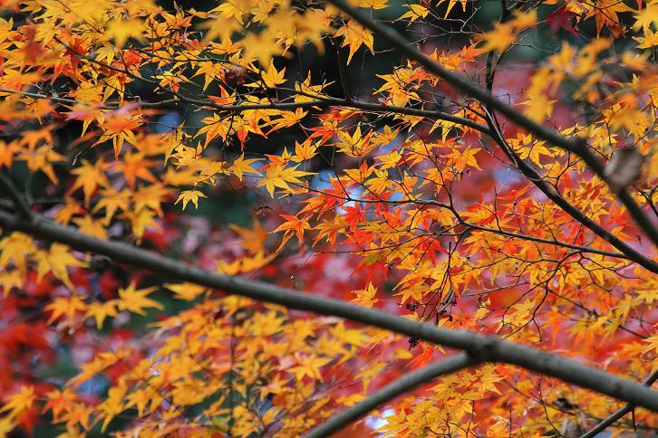 2011.12.05・『 金閣寺 』京都 11