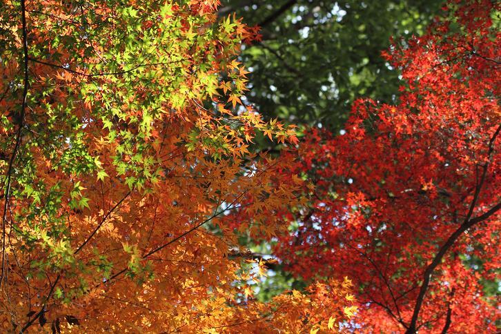 2011.12.05・『 金閣寺 』京都 12