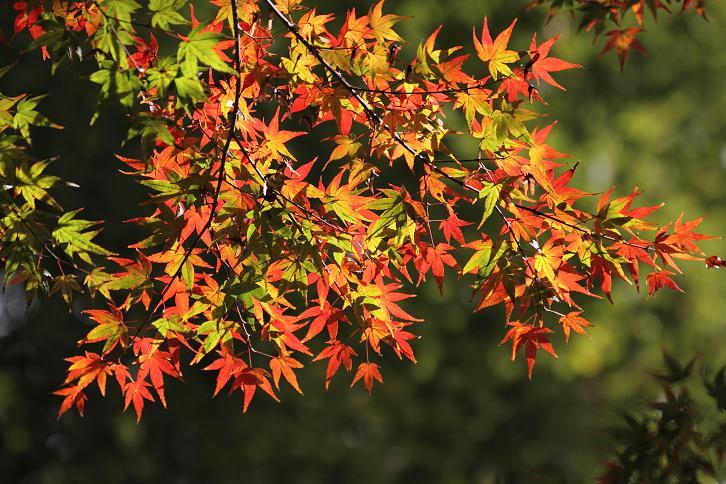 2011.12.05・『 金閣寺 』京都 13