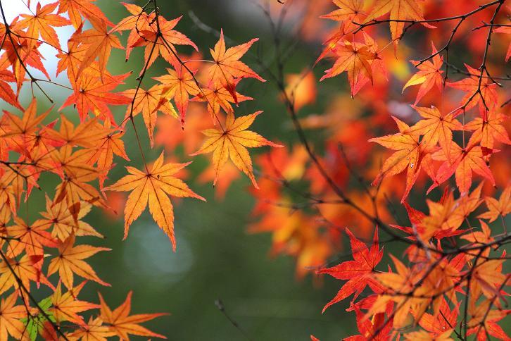 2011.12.05・『 金閣寺 』京都 14