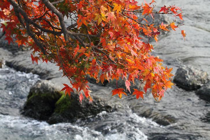 2011.12.05・『 渡月橋 』京都 04