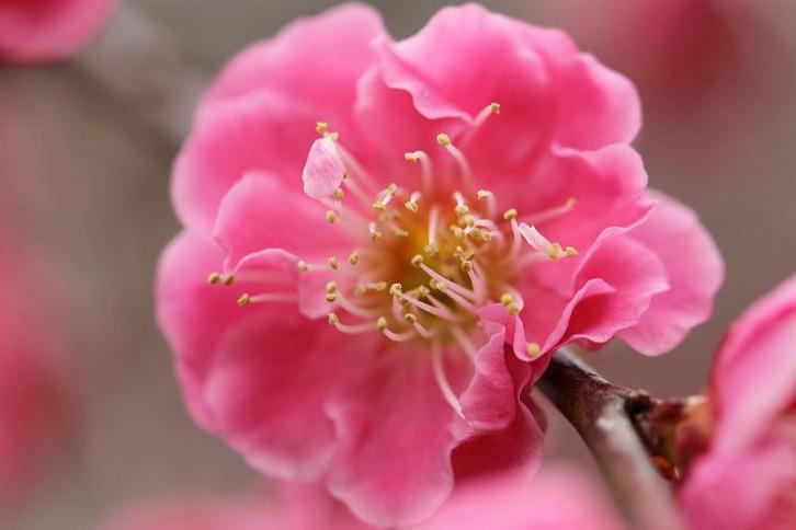2012.03.07・『 花の文化園・梅花 』 大阪府 河内長野市 08