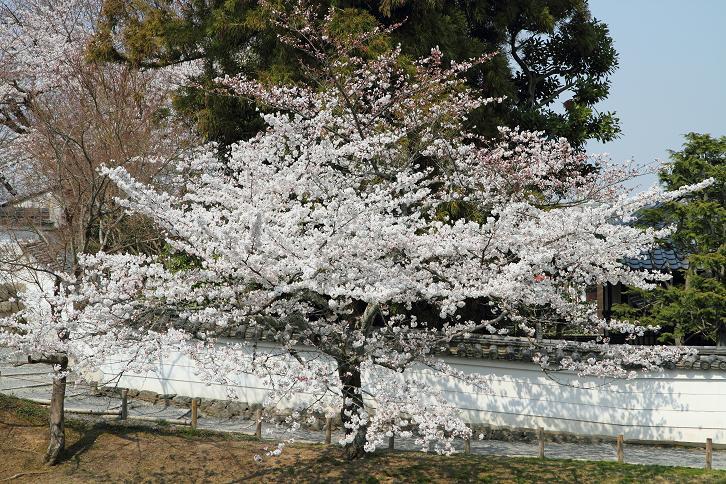2012.04.09・『 平等院 』 京都府 宇治市 03