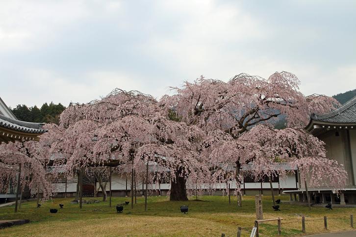 2012.04.09・『 醍醐寺 』 京都府 京都市 伏見区 12