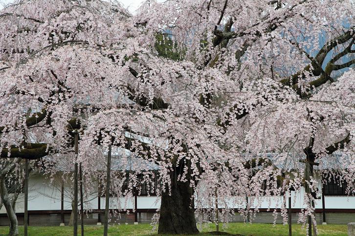 2012.04.09・『 醍醐寺 』 京都府 京都市 伏見区 11