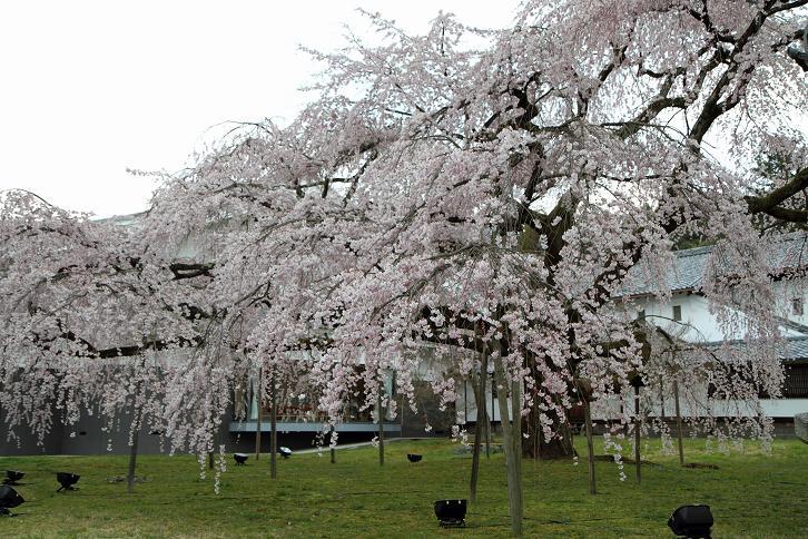 2012.04.09・『 醍醐寺 』 京都府 京都市 伏見区 10