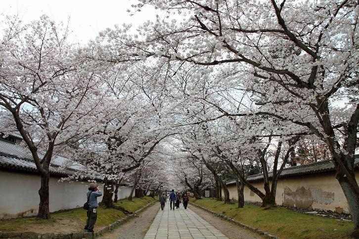 2012.04.09・『 醍醐寺 』 京都府 京都市 伏見区 05