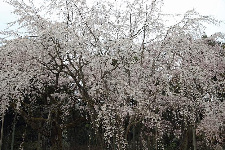2012.04.09・『 醍醐寺 』 京都府 京都市 伏見区 04