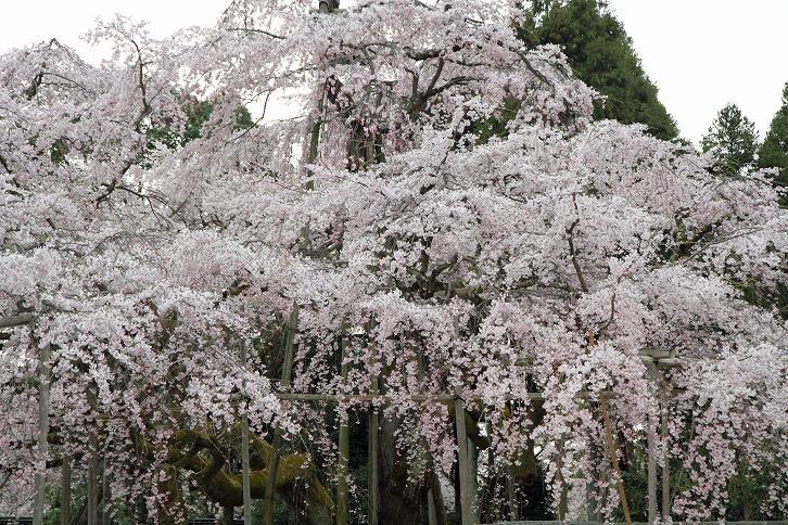 2012.04.09・『 醍醐寺 』 京都府 京都市 伏見区 03