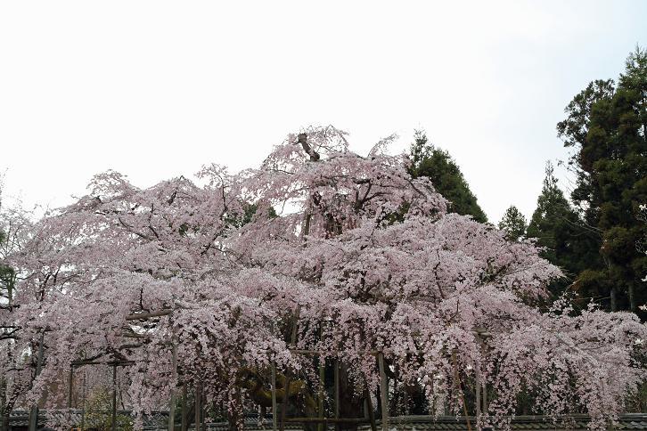 2012.04.09・『 醍醐寺 』 京都府 京都市 伏見区 02