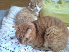 猫布団の上で