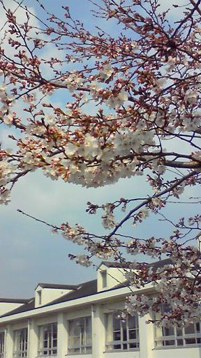 桜と佐保川小