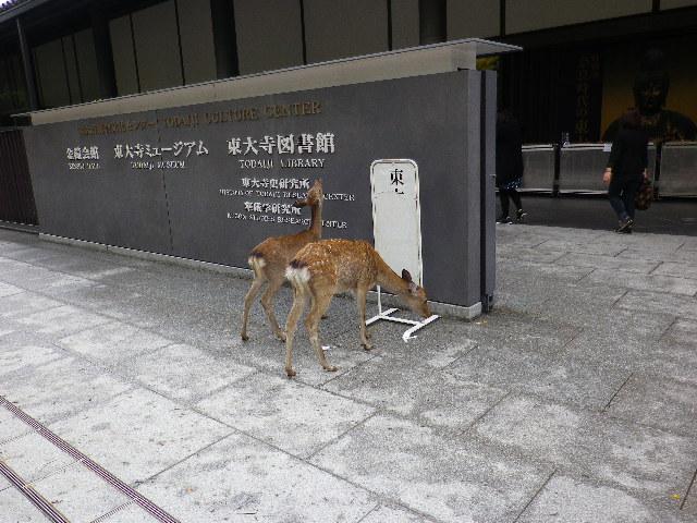 鹿がハミハミ