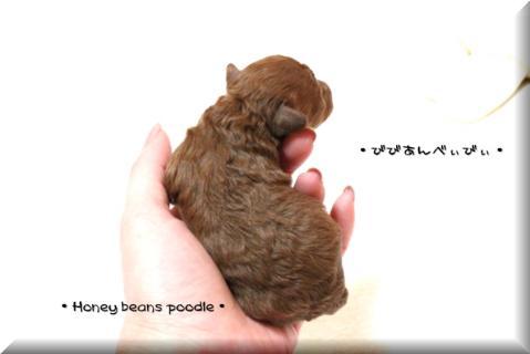 2011.2.14 びびあんべびー13