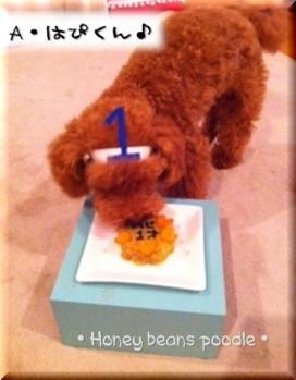 はぴくん1歳のお誕生日♪♪