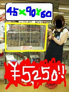4_20110522122753.jpg