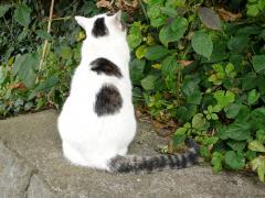 江の島の猫2(縮小版)
