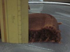 20101227-4-3.jpg