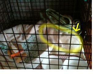 snap_hossyyossy_201043184446.jpg
