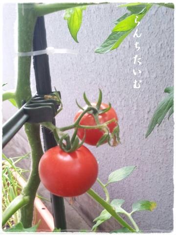 photo861-1.jpg