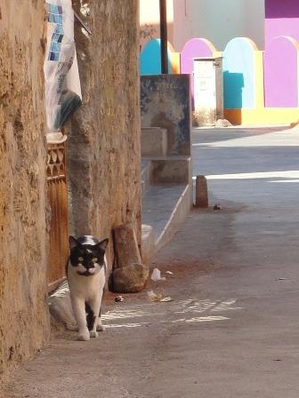 ディウ猫1