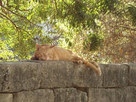 ディウ猫2