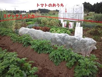 120130528 菜園