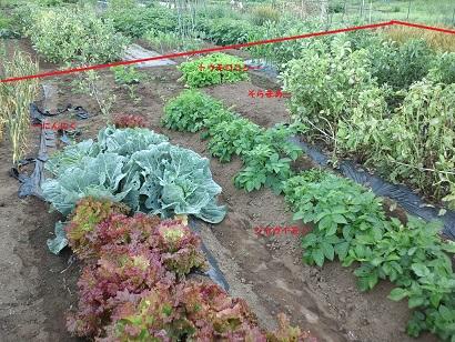 220130528 菜園