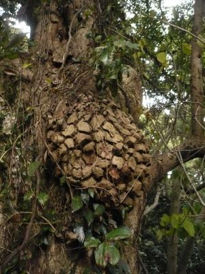 メロンパンの木