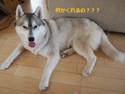 P6176629_convert_20130618221316.jpg