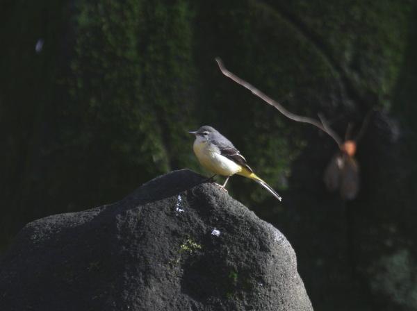 20110114-1 kisekirei-IMG_6953