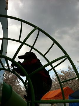 20110411臥竜公園滑り台