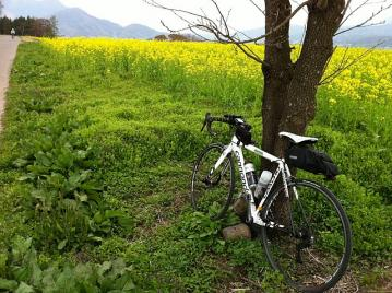 20110506CAAD10菜の花公園